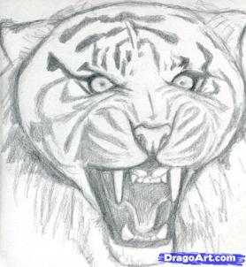 Рисуем голову тигра - шаг 6
