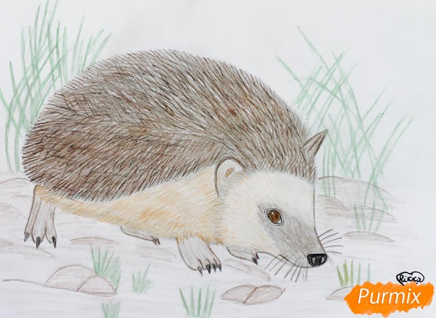 Рисуем ёжика на полянке цветными карандашами - фото 10