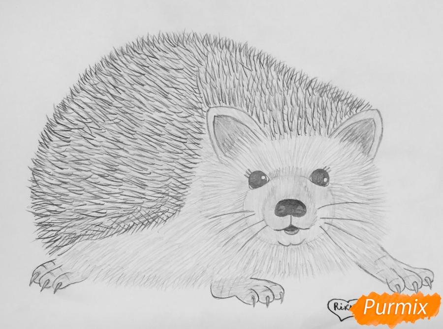 Рисуем ёжика простыми карандашами - фото 8