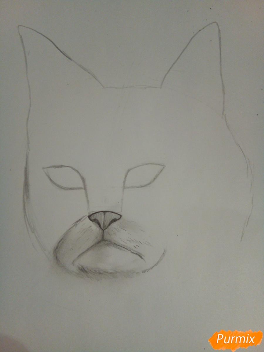 Рисуем голову сердитого кота простым - шаг 5