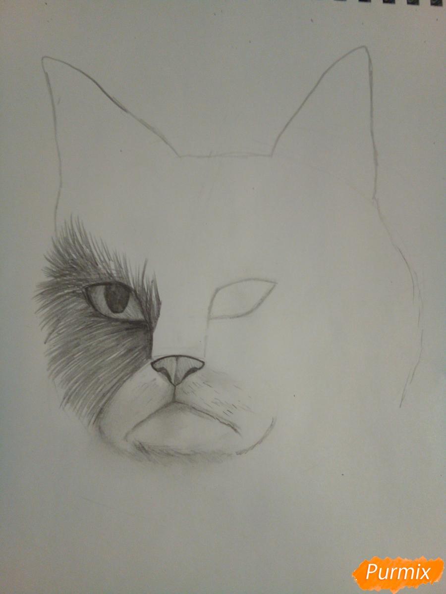 Рисуем голову сердитого кота простым - шаг 6