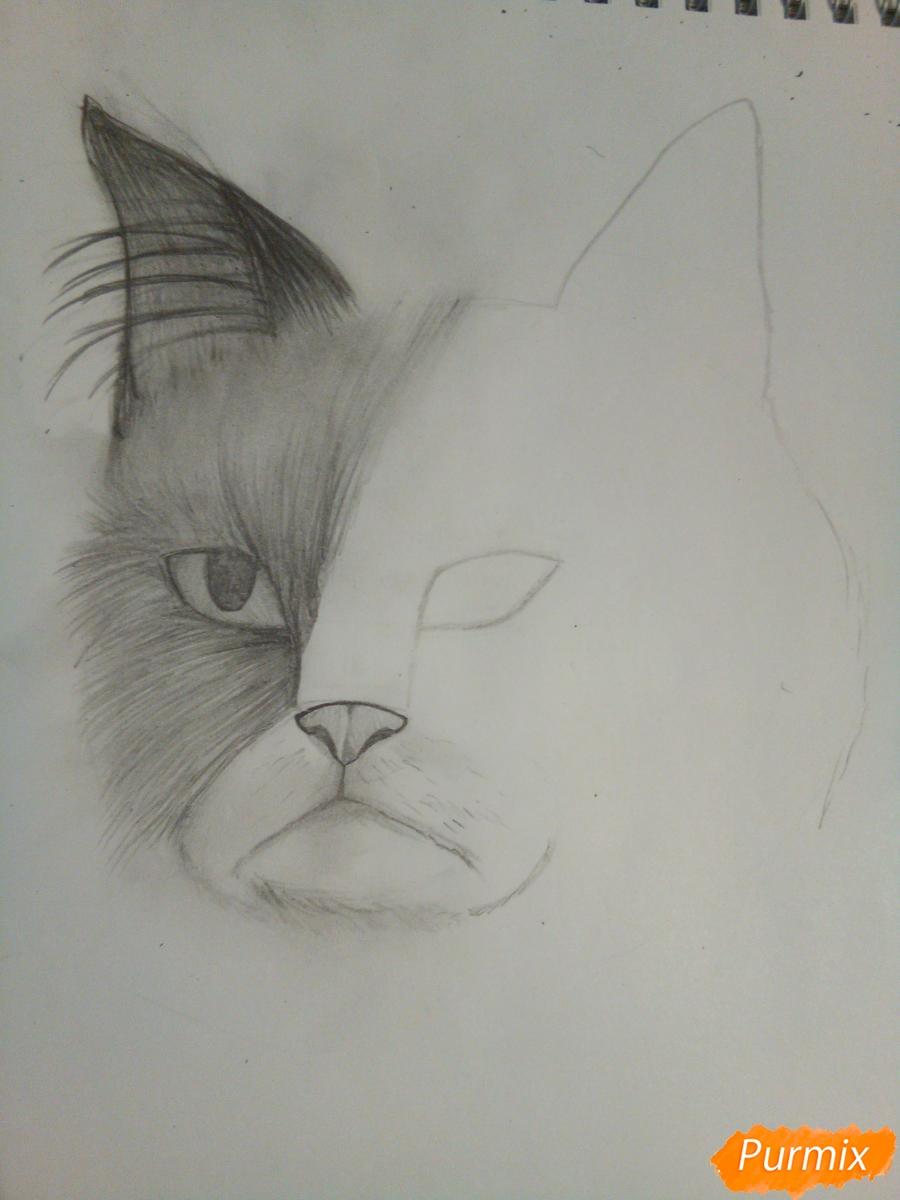 Рисуем голову сердитого кота простым - шаг 7