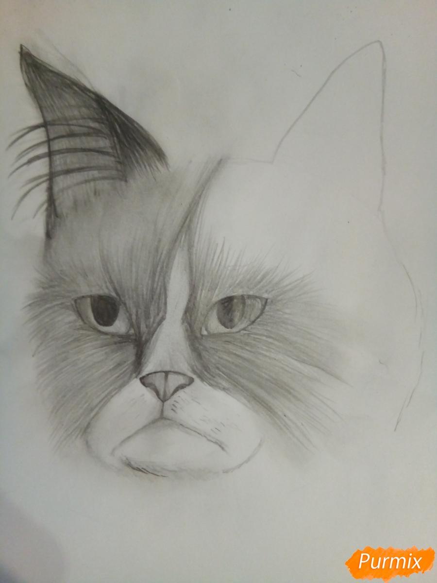 Рисуем голову сердитого кота простым - шаг 8