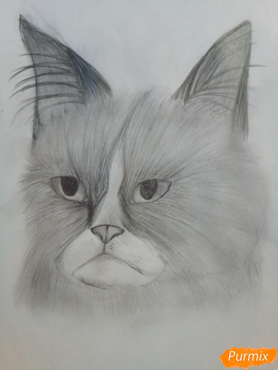 Как нарисовать голову сердитого кота простым карандашом поэтапно