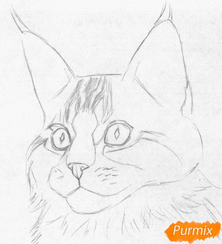 Рисуем кошку породы Мейн-кун - шаг 1