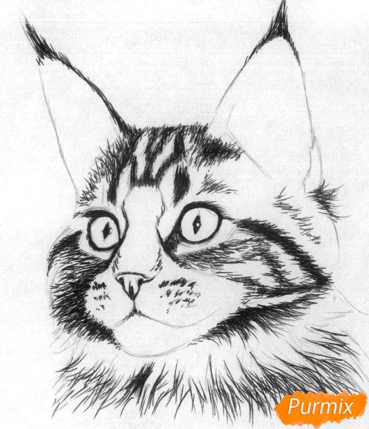 Рисуем кошку породы Мейн-кун - шаг 2