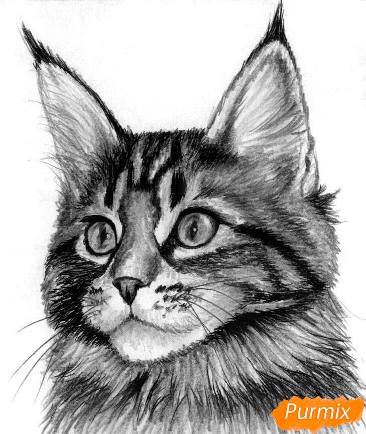 Рисуем кошку породы Мейн-кун - шаг 4