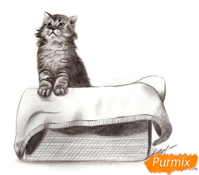 Как нарисовать котенка в коробке карандашом поэтапно