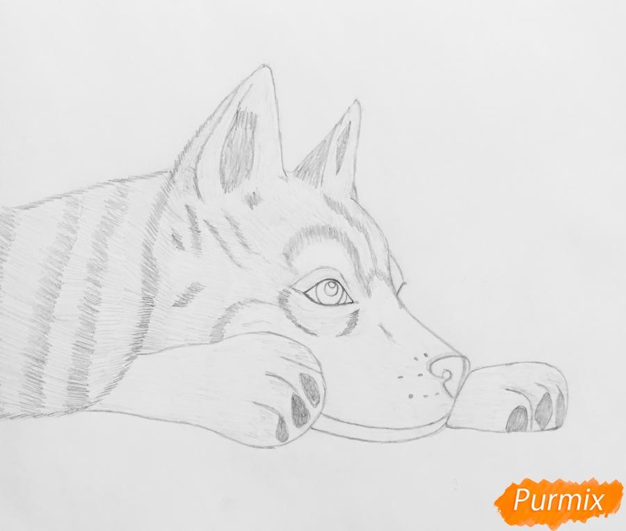Рисуем лежащего голубоглазого щенка хаски - фото 6