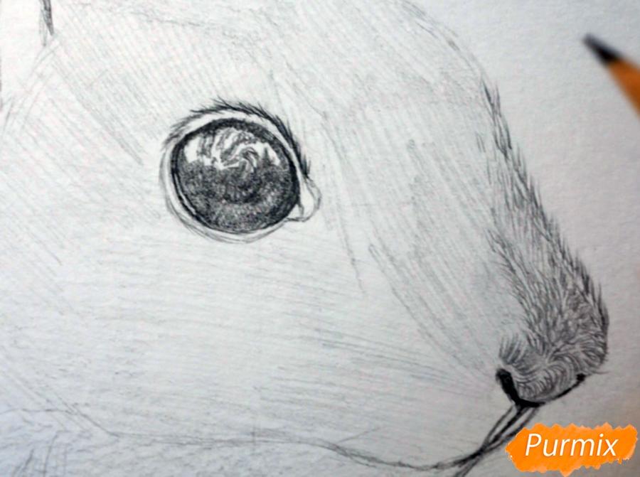 Рисуем морду белки - фото 5