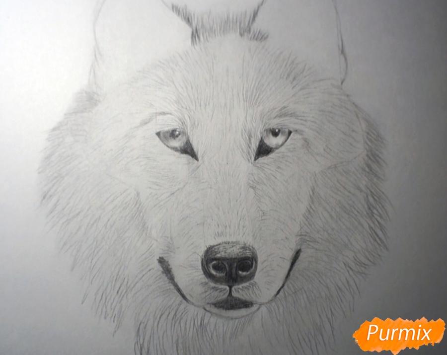 Рисуем морду Волка - фото 7
