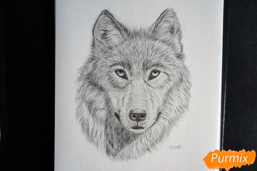 Рисуем морду Волка - фото 8