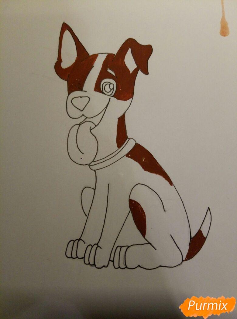 Рисуем мультяшную собаку пороты Джек-рассел-терьер - фото 8