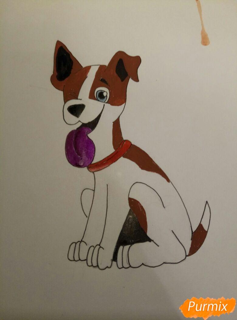 Рисуем мультяшную собаку пороты Джек-рассел-терьер - фото 9