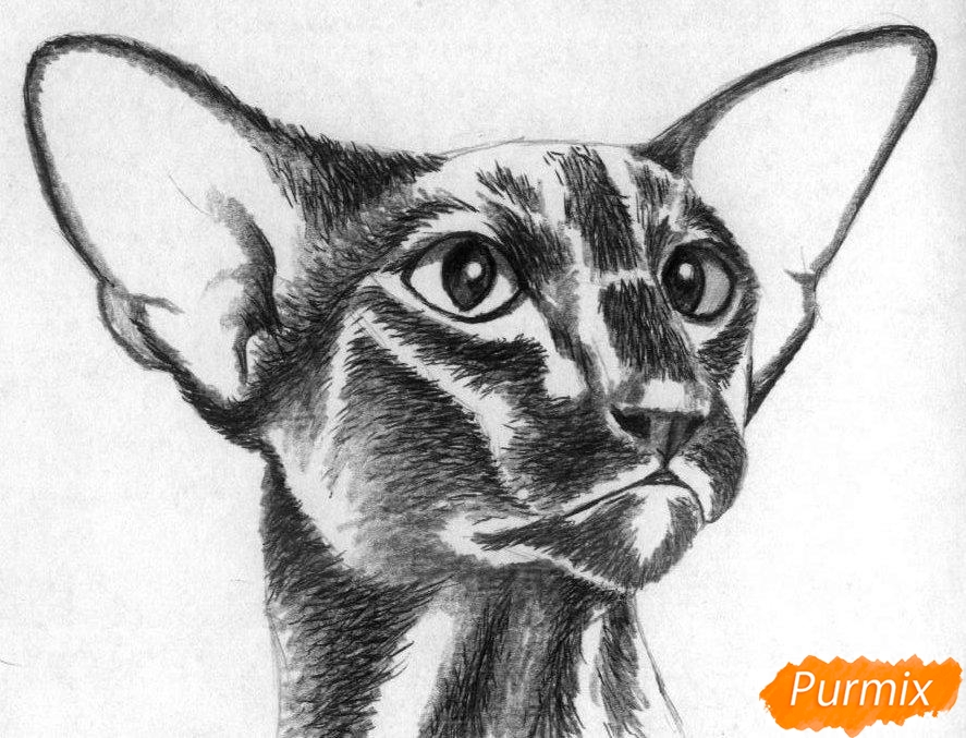Рисуем ориентальную кошку - фото 3