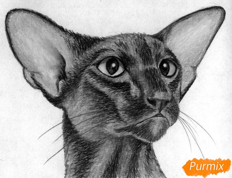 Как нарисовать ориентальную кошку карандашом поэтапно