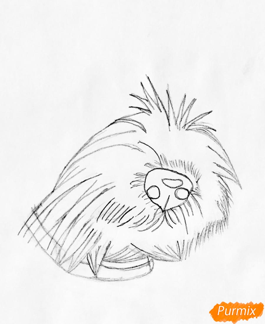 Рисуем собаку породы Джек-рассел-терьер - шаг 1
