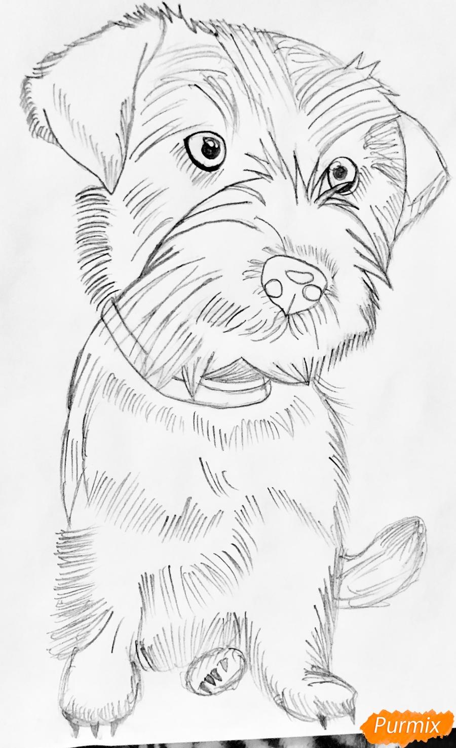 Рисуем собаку породы Джек-рассел-терьер - шаг 3