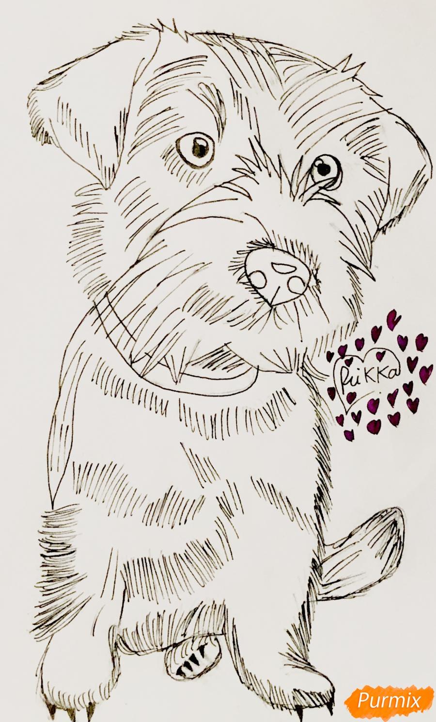 Рисуем собаку породы Джек-рассел-терьер - шаг 4