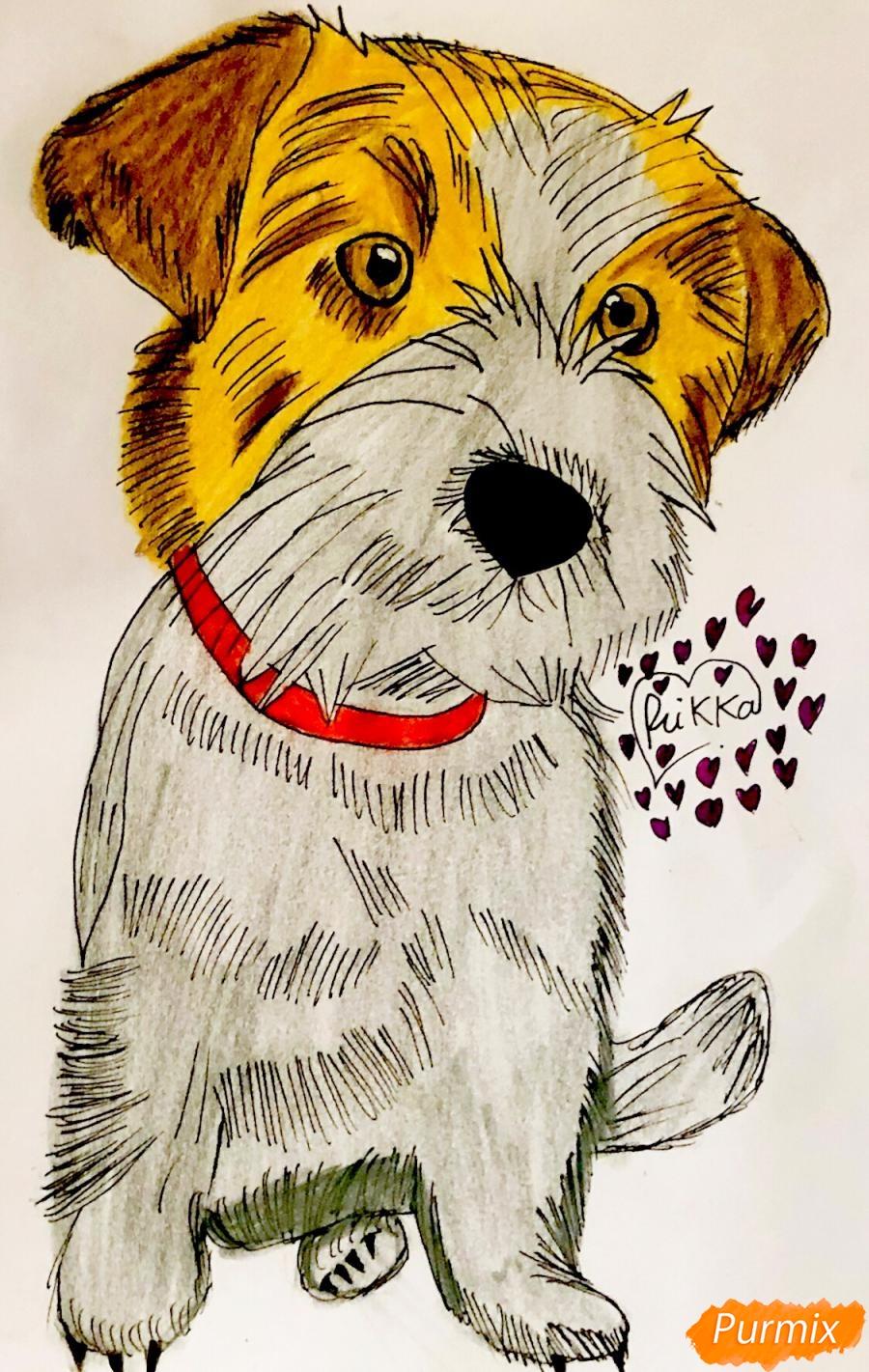 Рисуем собаку породы Джек-рассел-терьер - шаг 7
