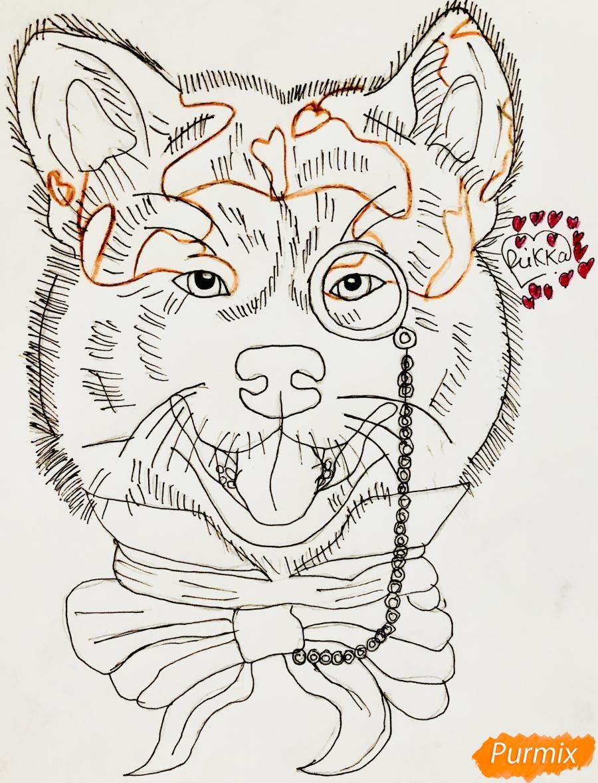 Рисуем собаку породы Сиба Ину с шарфиком цветными карандашами - фото 6