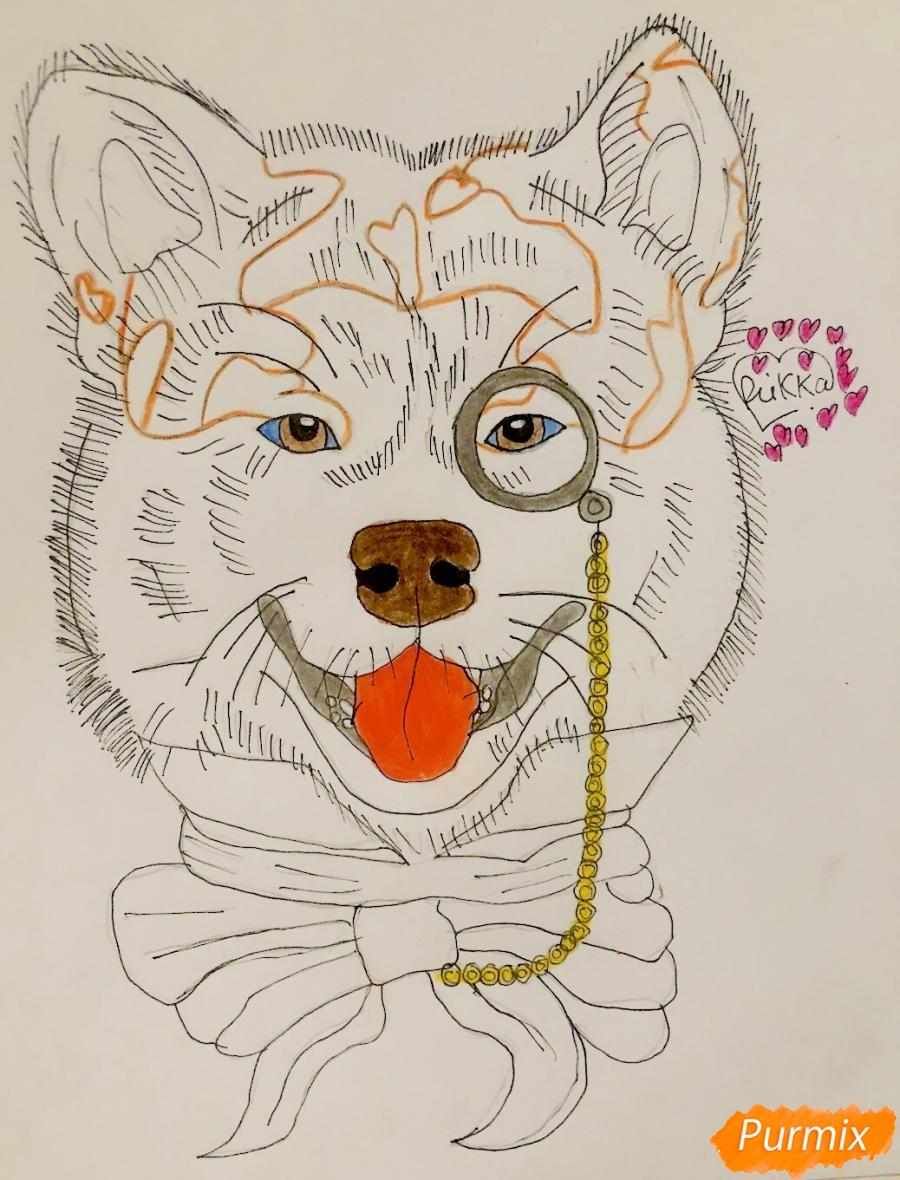 Рисуем собаку породы Сиба Ину с шарфиком цветными карандашами - фото 7