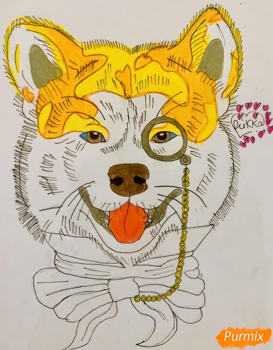 Рисуем собаку породы Сиба Ину с шарфиком цветными карандашами - фото 8
