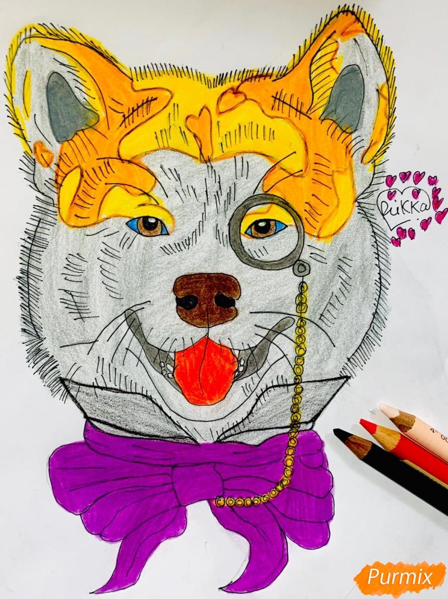 Как нарисовать собаку породы Сиба Ину с шарфиком цветными карандашами поэтапно