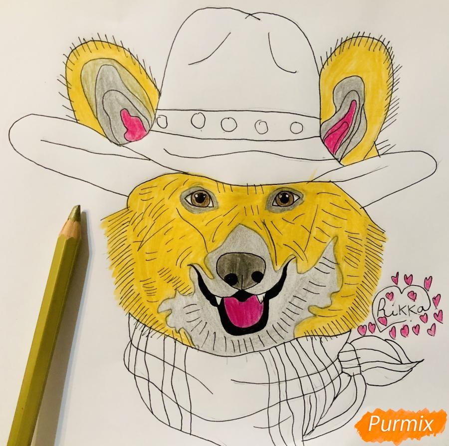 Рисуем собаку породы Вельш-корги пемброк с шляпой цветными карандашами - фото 8