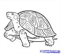 Как легко нарисовать Черепаху карандашом поэтапно