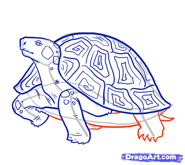 Рисуем стоящую черепаху - шаг 10
