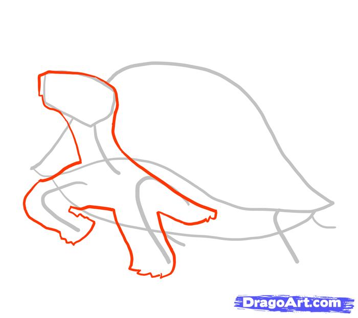 Рисуем стоящую черепаху - шаг 2