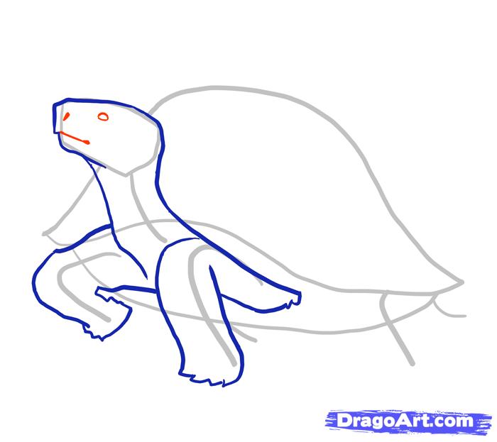 Рисуем стоящую черепаху - шаг 4