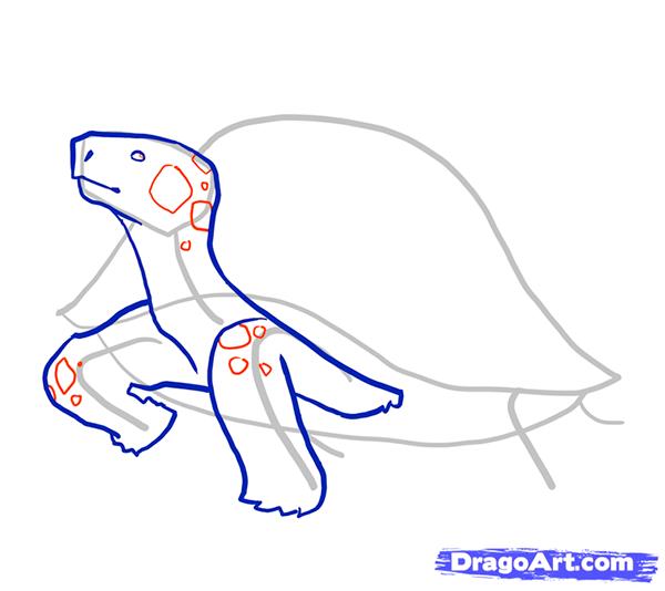 Рисуем стоящую черепаху - шаг 5