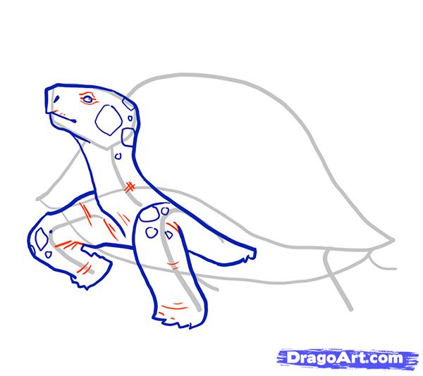 Рисуем стоящую черепаху - шаг 6