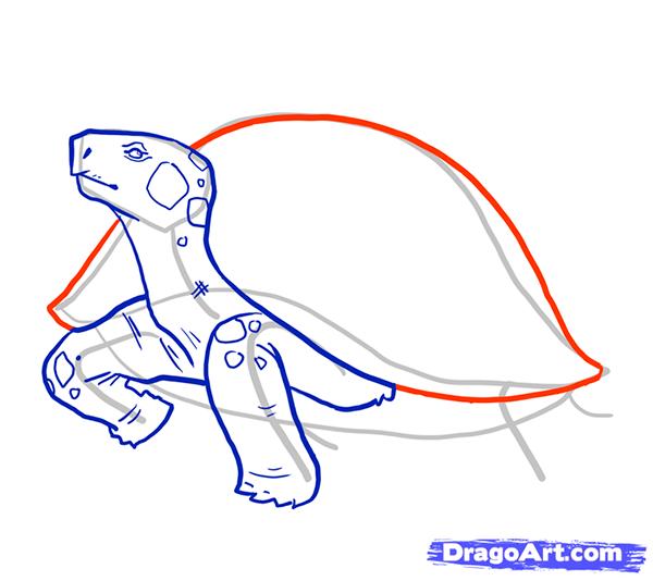 Рисуем стоящую черепаху - шаг 7