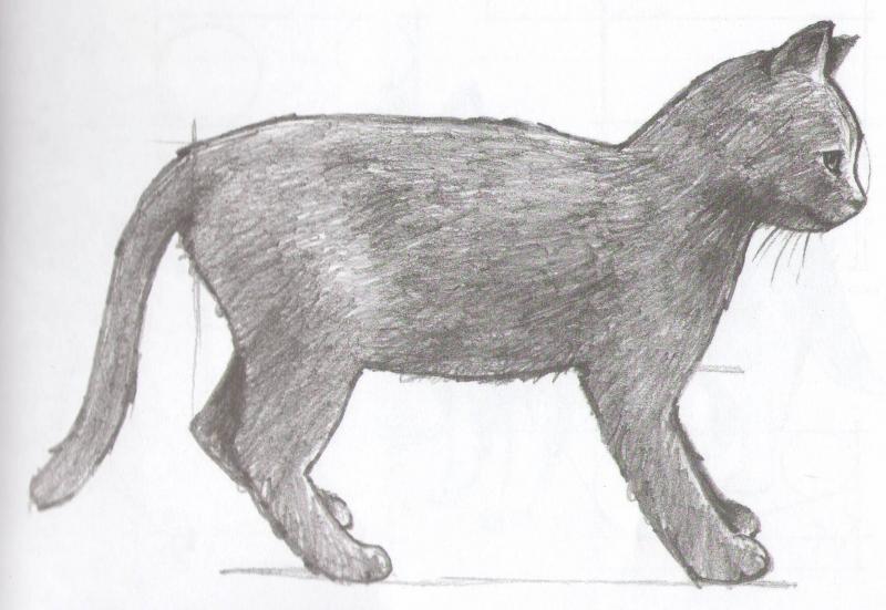 Рисуем кота карандашами  для начинающих - шаг 5