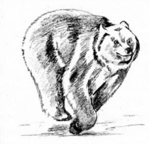 Рисуем Бегущего медведя