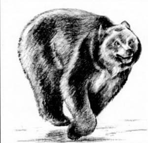 Как нарисовать Бегущего медведя карандашом поэтапно