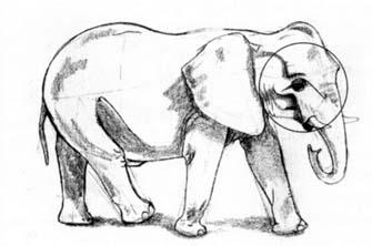Рисуем слона в движении - шаг 3