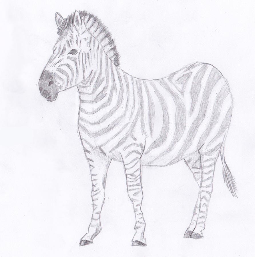 Как нарисовать зебру карандашом поэтапно