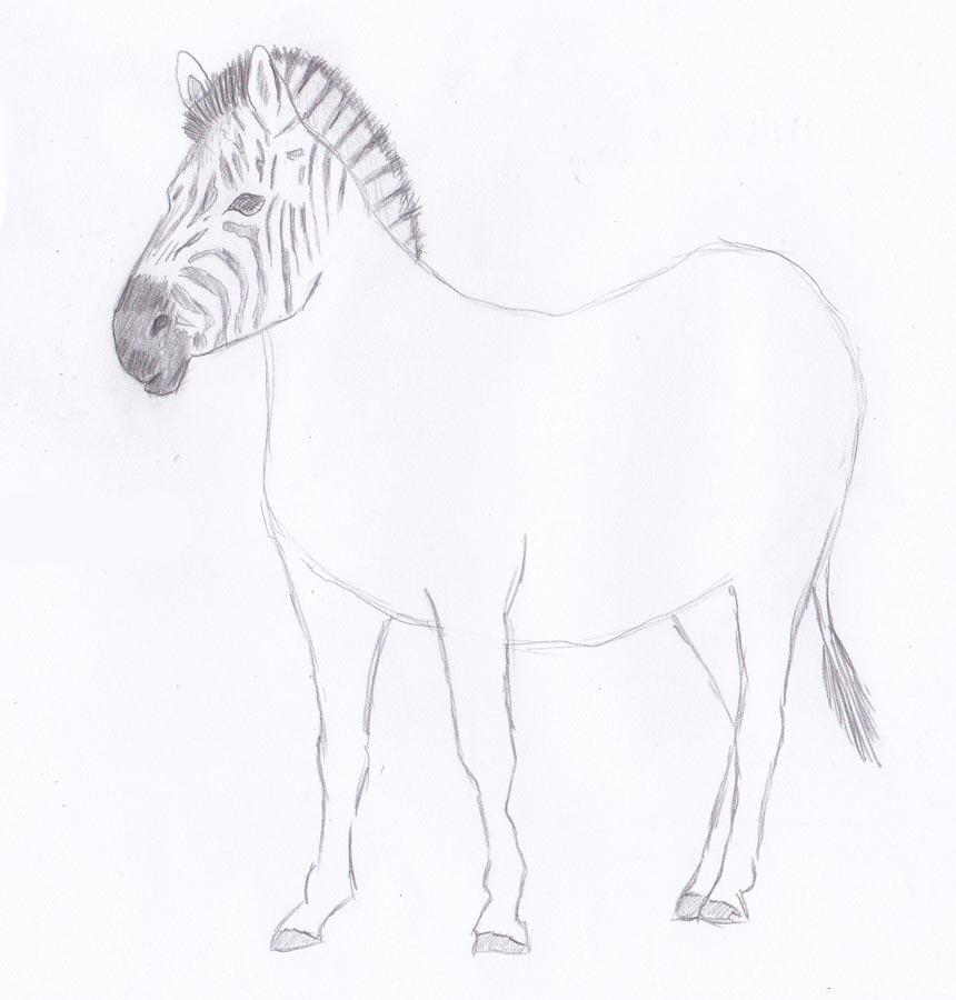 Рисуем зебру - шаг 6