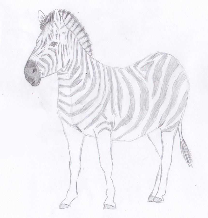 Рисуем зебру - шаг 8