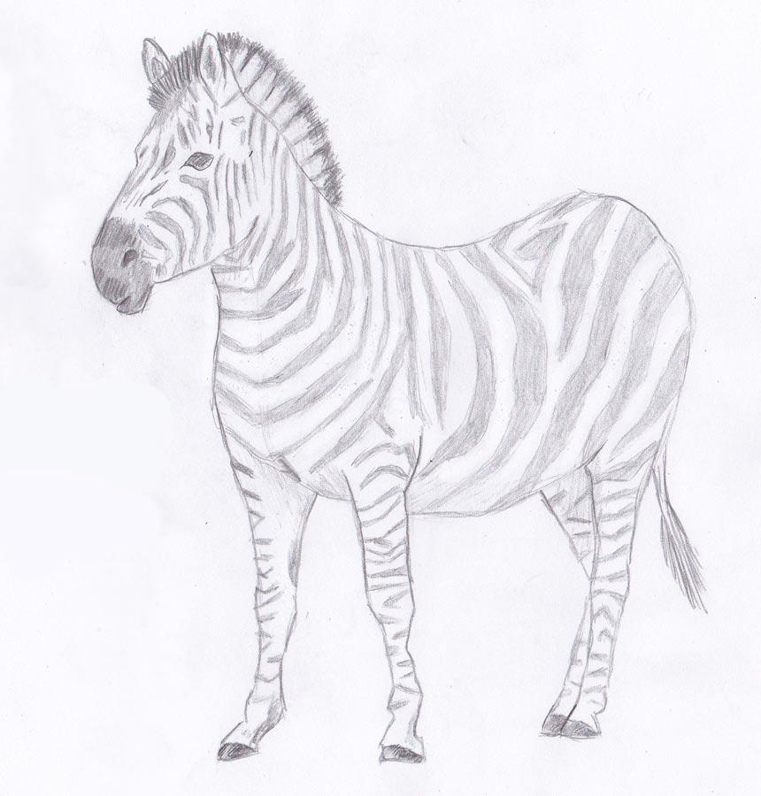 Рисуем зебру - шаг 9