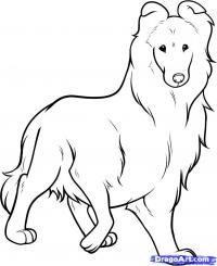собаку Колли карандашом