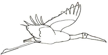 Как нарисовать аиста на бумаге карандашом поэтапно