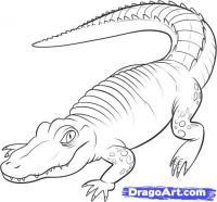 Как нарисовать Аллигатора карандашом поэтапно