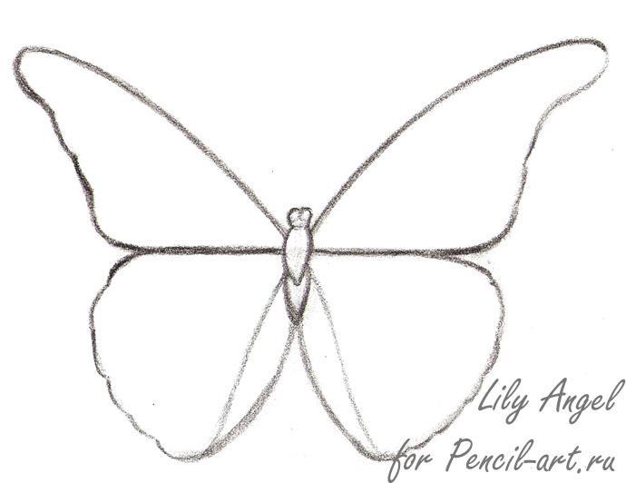 Как нарисовать бабочку Morpho Anaxibia карандашом поэтапно