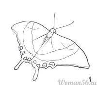 Как нарисовать Бабочку карандашом поэтапно