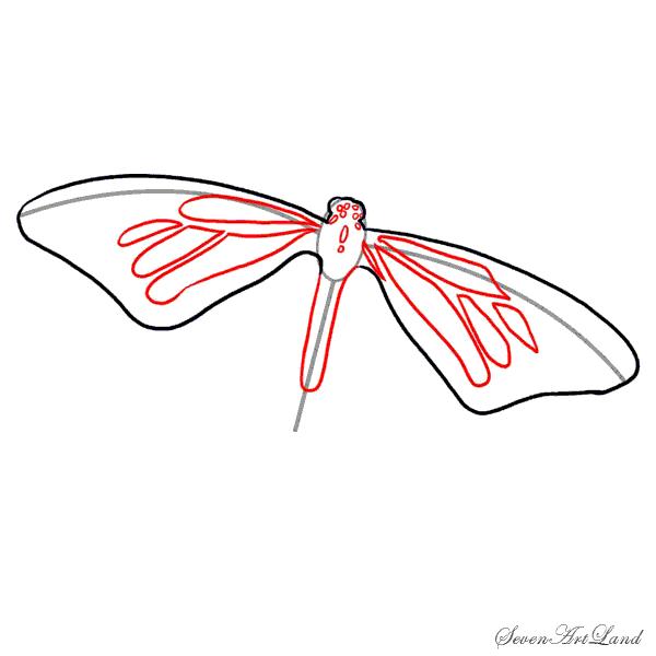 Как нарисовать бабочку монарх